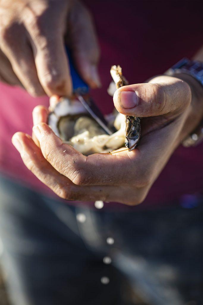 Haward's oysters